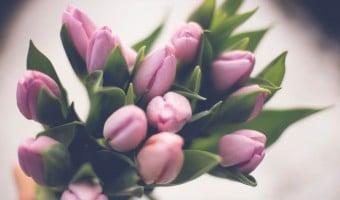 Tips til pasning af tulipaner