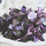 Sådan tørrer jeg estragon og basilikum fra haven